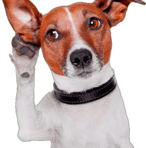 Perro escuchando