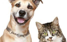 Ectoparásitos que se pueden transmitir de las mascotas al hombre