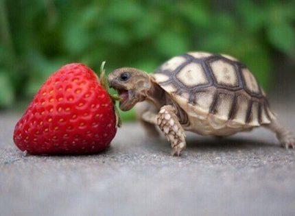 Cuidados después de la hibernación en las tortugas