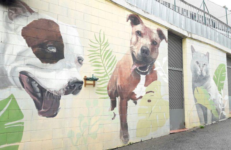 El CAACB garantiza el cuidado y el bienestar de los animales abandonados durante el Estado de Alarma