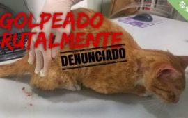 Agresión brutal a un gato que tuvo que ser eutanasiado