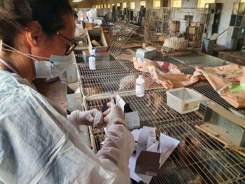 Criadero ilegal - Zaragoza Rescate Perros