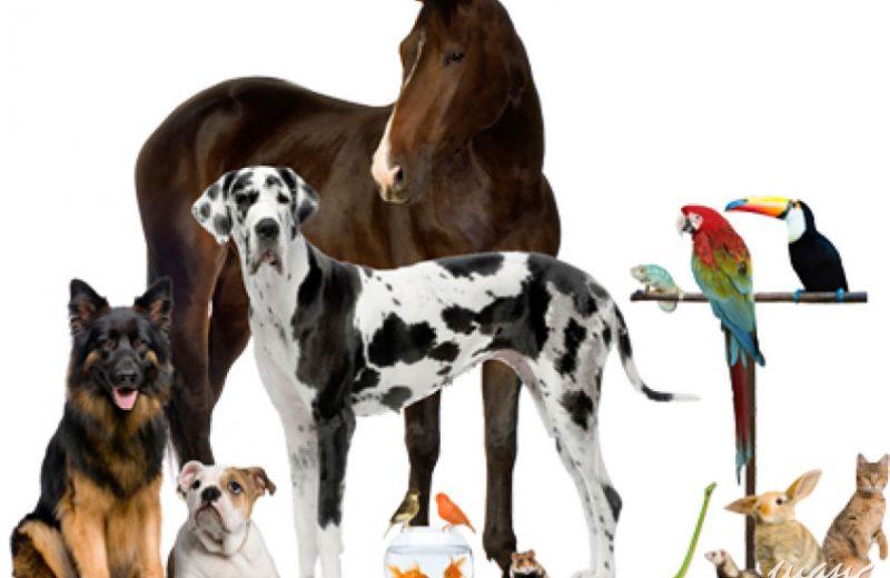 La Comisión Europea lanza una consulta sobre protección y bienestar animal