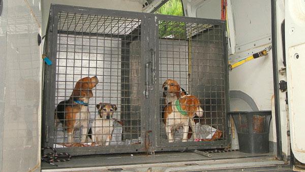 La Policía Local de Blanes desmantela un criadero ilegal de perros de raza