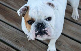 La RSCE pide endurecer las penas por abandono y maltrato en la nueva Ley de Protección Animal