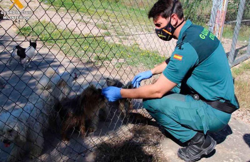 Más de mil peticiones para adoptar a los perros del criadero ilegal de Maella