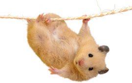 Enriquecimiento ambiental para roedores