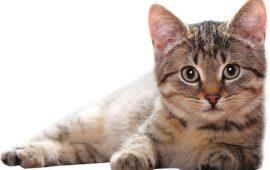 Alimentación en gatos según su edad, la mejor nutrición