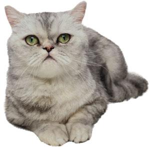 Alimentación en gatos senior