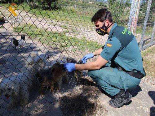 Presunto delito de maltrato animal