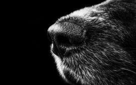 Ciudadanos propone incorporar perros para la detección precoz de la COVID-19