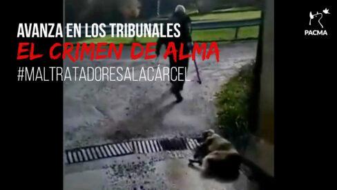 El proceso judicial contra el cazador que mató a la perra Alma sigue adelante