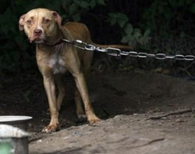 Dos años de SOJMA (Servicio de Orientación Jurídica contra el Maltrato Animal)