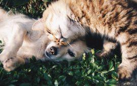 El cuidado de tu mascota: la importancia de escoger el mejor antiparasitario