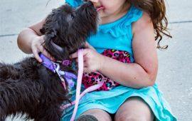 APDDA y PRODA proponen a los grupos del Congreso incluir la empatía hacia los animales en la nueva 'Ley de Educación'