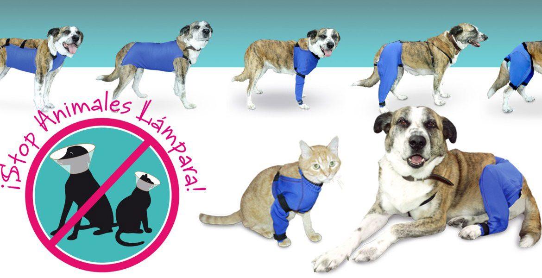 Prendas veterinarias