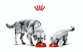 El 85% de los propietarios entiende como clave la interacción con su mascota para combatir la soledad