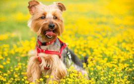 ¿Qué necesitamos para ir al campo con nuestro perro?
