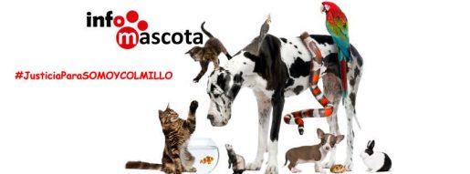 Infomascota SomoyColmillo