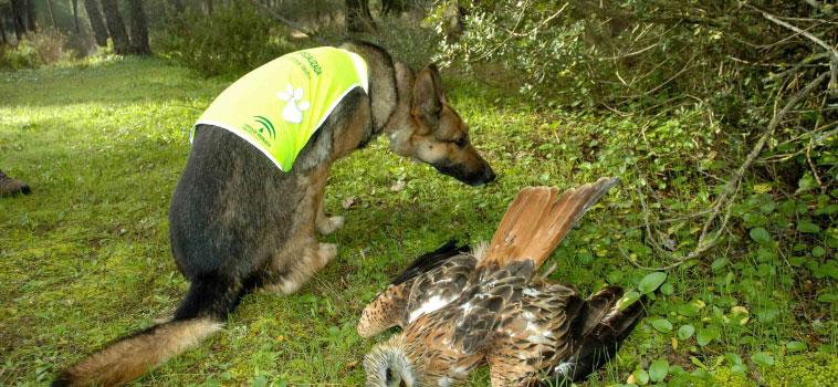 Milano muerto y patrulla canina