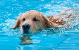 Empiezan las vacaciones, ¿cómo afecta el calor a tus mascotas?