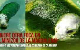 ¡Muere otra foca en el minizoo de Santander!