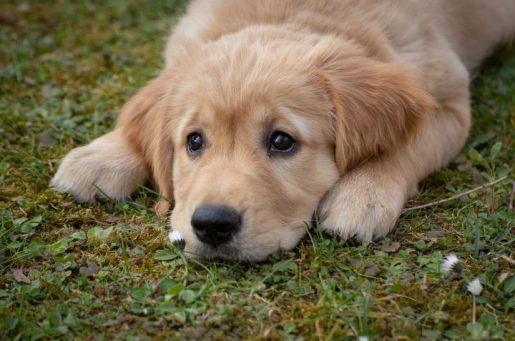 Ni un perro sin hogar; ni un hogar sin perro