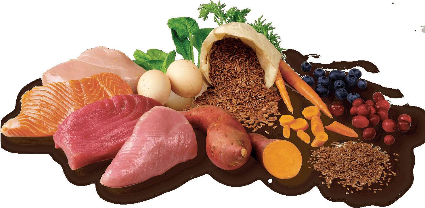 Proteínas en comidas para perros