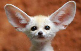 Solicitan un listado para regular las especies de mascotas exóticas en España