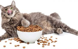 Alimentos para mascotas y la huella de carbono