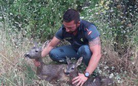 La Guardia Civil salva a un corzo y a su cría de morir ahogados