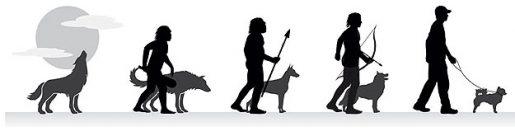 Perro evolución