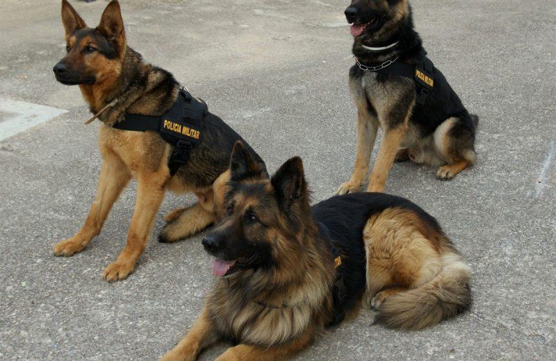 Policía Militar de Cuatro Patas
