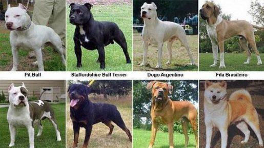 Perros Potencialmente Peligrosos - PPP