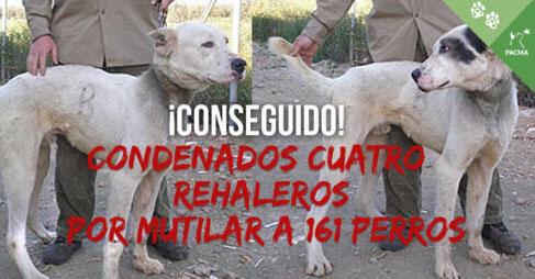Rehaleros condena Huelva