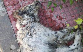 Tolerancia cero ante el maltrato animal, el Ayuntamiento de Collado Villalba se persona como acusación