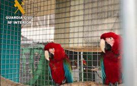 280 especies protegidas incautadas por la Guardia Civil en una red delictiva