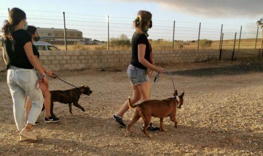 Animales evacuados incendio - Centro de Protección de Animales Huelva