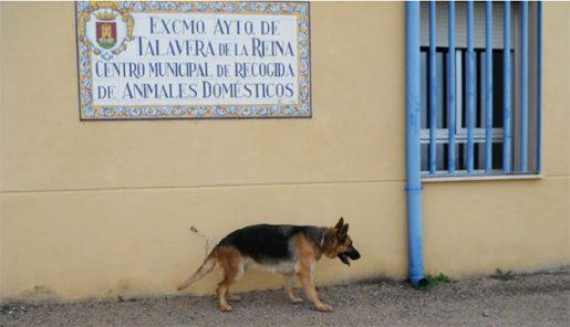 Centro de Protección Animales de Talavera