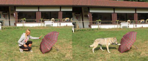 Experimento perros