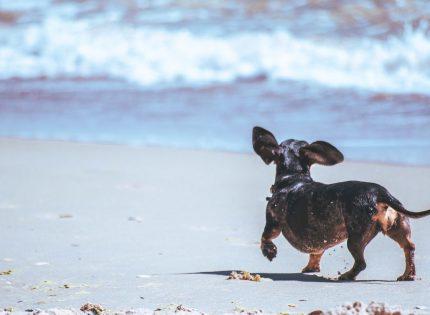 Como ir con tu perro a la playa con toda seguridad
