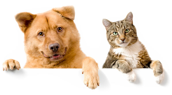 Perro y gato
