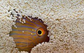 Por qué unos peces se levantan más temprano que otros