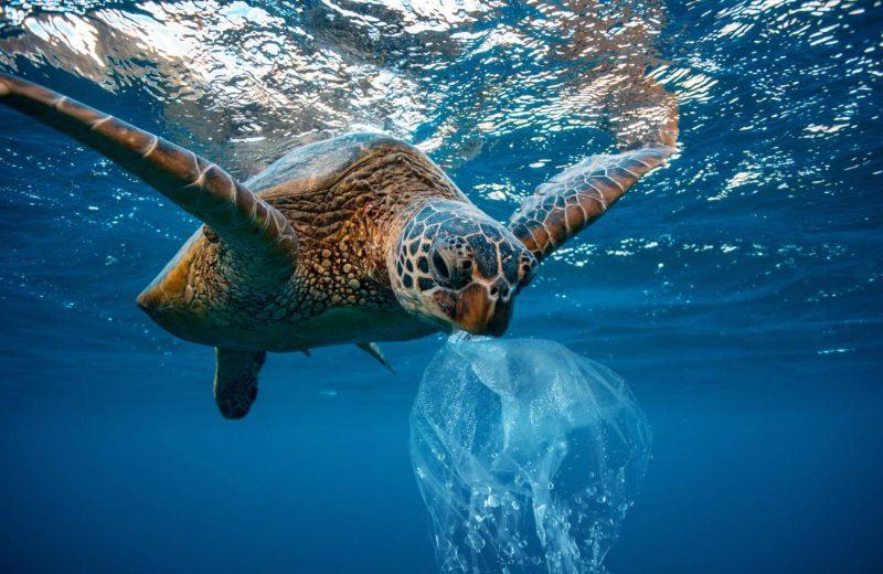 El oceáno Atlántico tiene más microplásticos que los que se creía