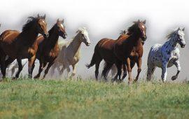 La Universidad de Extremadura estudian la seroprevalencia del virus del Nilo en caballos de la región