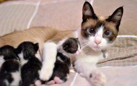 Cómo mamá gata sabe lo que le pasa a sus gatitos con el llanto