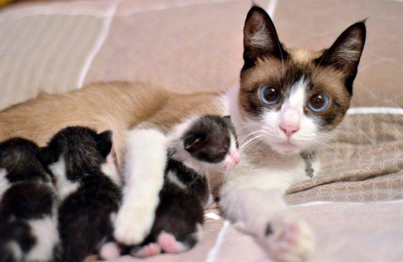 Gata con crías