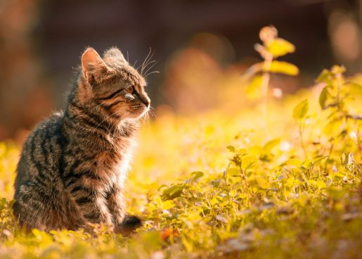Colonias de gatos - Gatos abandonados