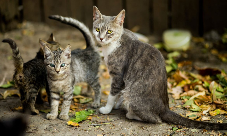 Colonias Felinas - Gatos abandonados