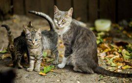 Torremolinos velará por las colonias de gatos con el método CER